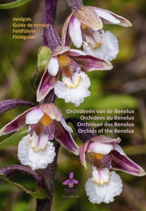 Orchids of the Benelux book cover